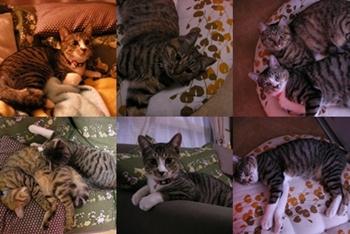 2007-11-1.jpg