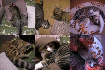2007-11-3.jpg