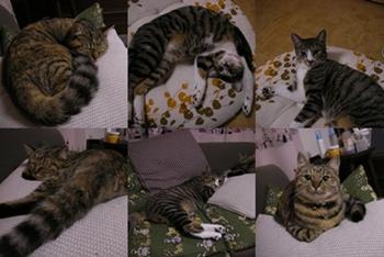 2007-11-5.jpg