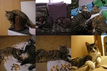 2007-11-6.jpg