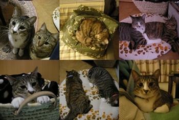 2008-1-4.jpg