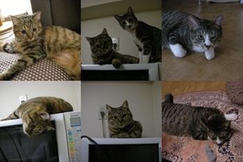 2008-1-8.jpg