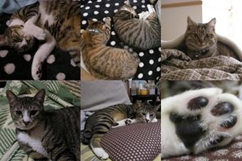 2008-3-2.jpg