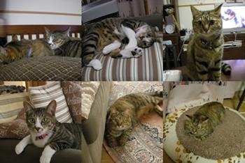 2008-6-11.jpg