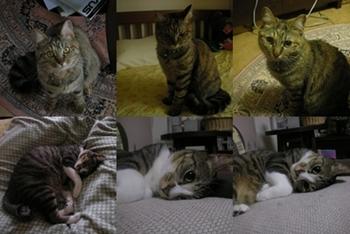 2008-6-4.jpg