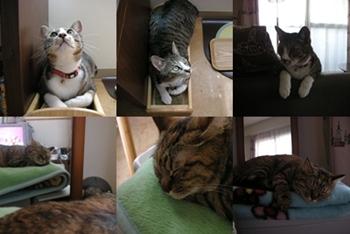 2008-6-9.jpg