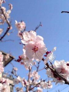 春ですよ~♪