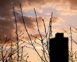 桜つぼみ2