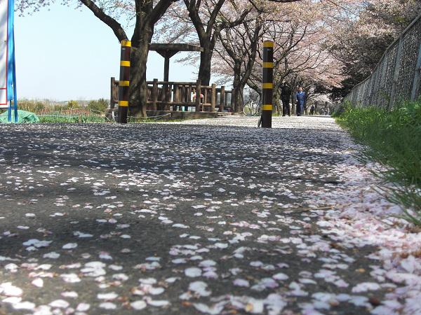 petals 7