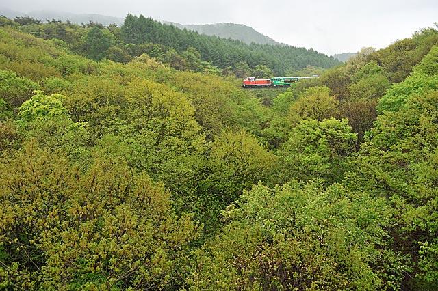 sinryokuwoiku