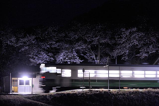 nakagawayozakura