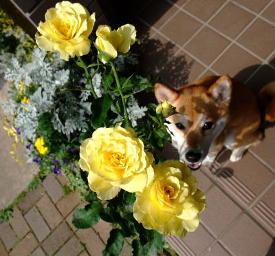 バラも好き♪