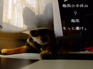 DSCF7691.jpg