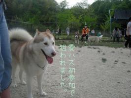 05.03愛ハス11