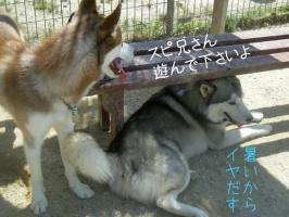 06.07愛ハス6