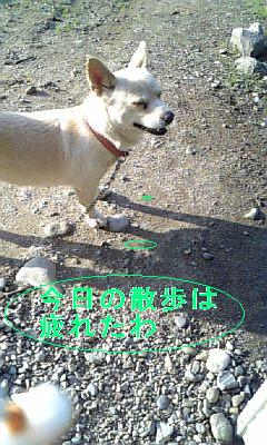 DVC00057A.jpg