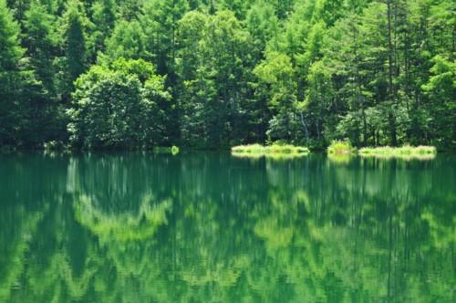 水面に映る夏