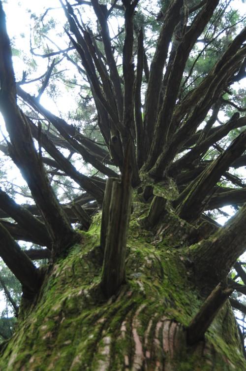 森の中の大樹