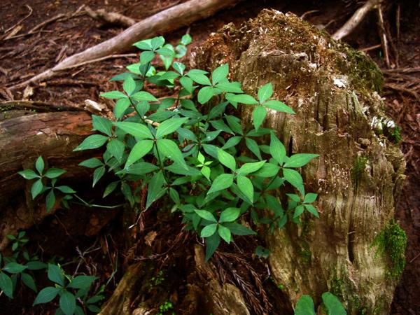森林に息づく新しい命