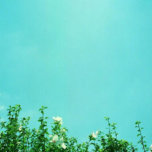 blog0115.jpg