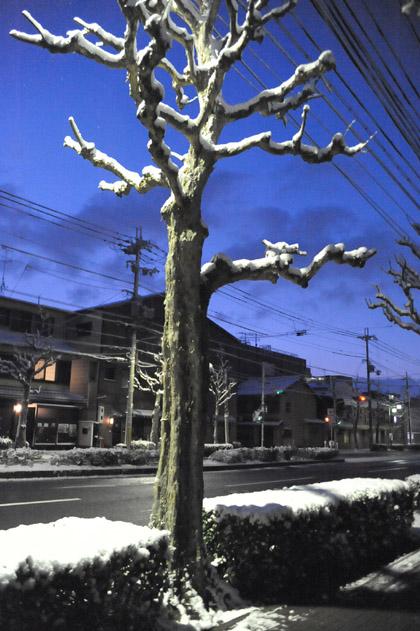 夜明けの街路樹