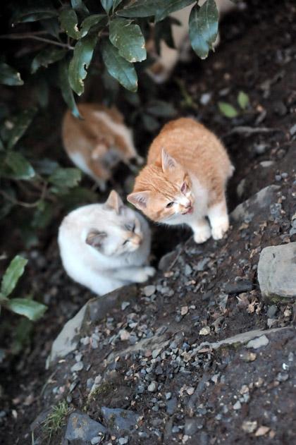 仔猫/カイとブイ