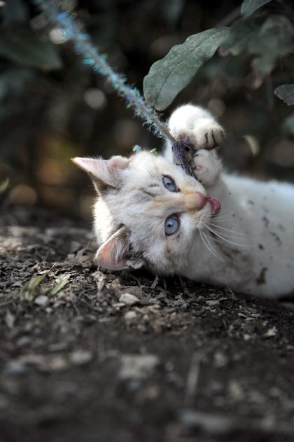 仔猫のカイ