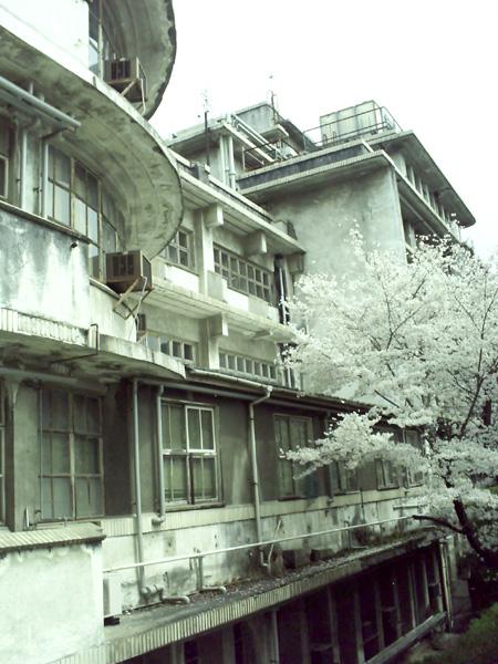 旧病棟横の桜
