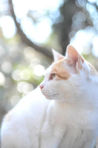 母猫の肖像