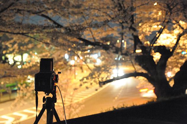 夜桜撮影中