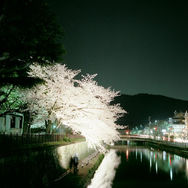 夜桜/疎水