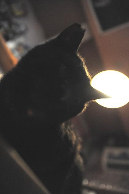 黒猫ジジちゃん