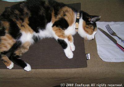 食卓に並んだのは猫さんだった