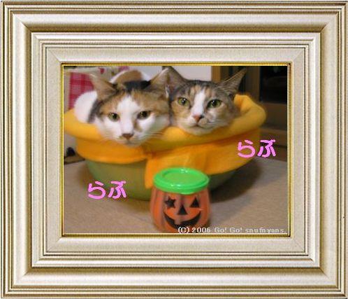ねこ 猫 ハロウィン祭り 01番