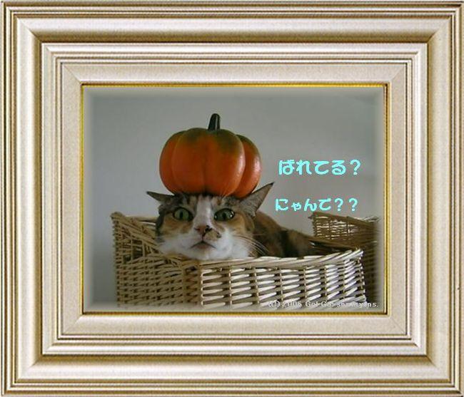 ねこ 猫 ハロウィン祭り 02番