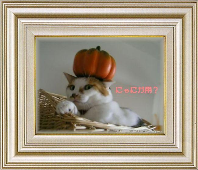 ねこ 猫 ハロウィン祭り 03番