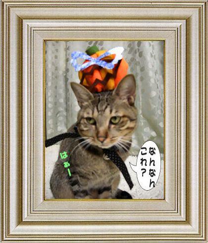 ねこ 猫 ハロウィン祭り 05番