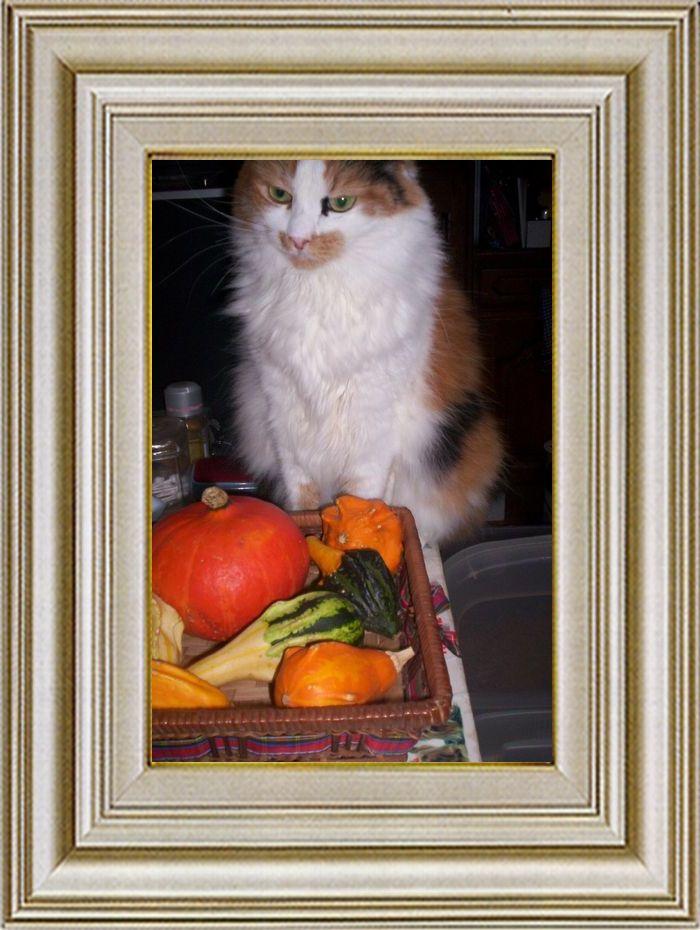 ねこ 猫 ハロウィン祭り 06番