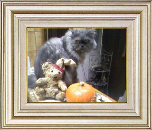 ねこ 猫 ハロウィン祭り 08番