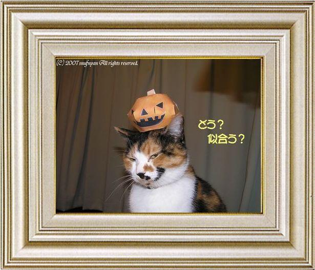 ねこ 猫 ハロウィン祭り 10番