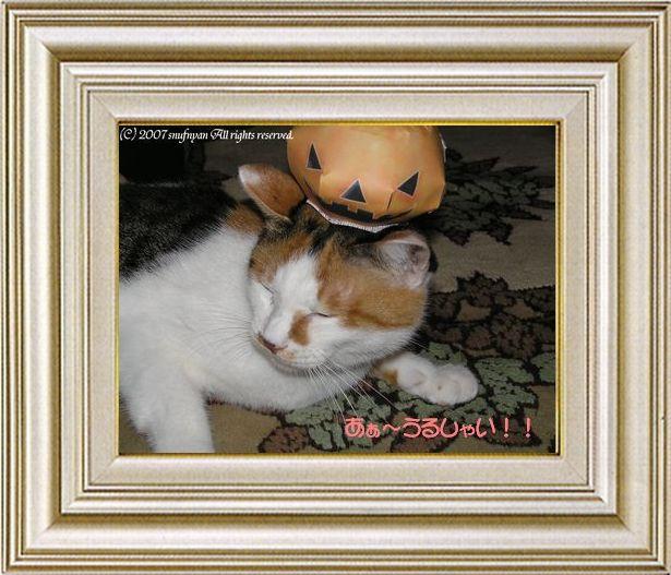 ねこ 猫 ハロウィン祭り 11番