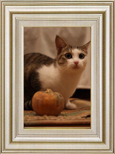 ねこ 猫 ハロウィン祭り 14番