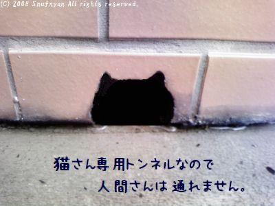猫専用通り道