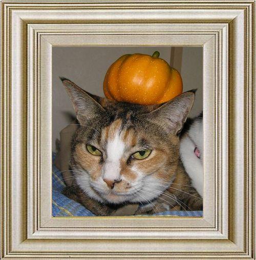 ねこ 猫 ハロウィン祭り 16番