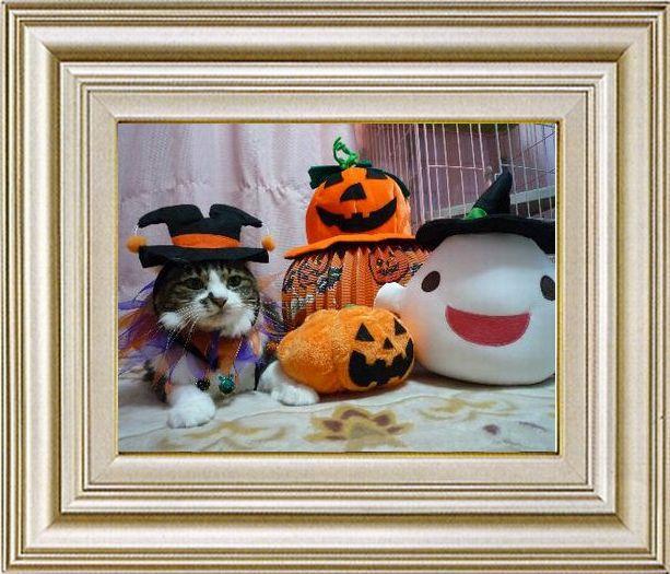 ねこ 猫 ハロウィン祭り 17番