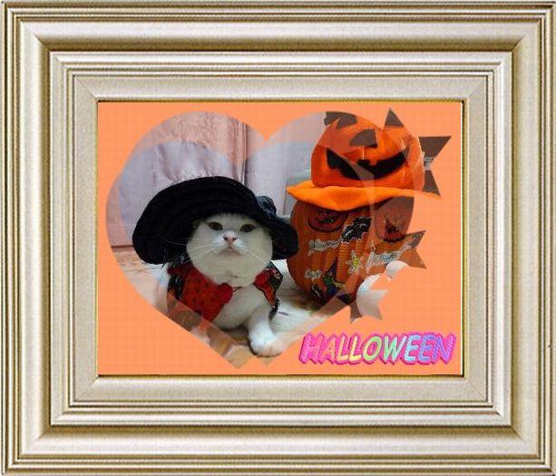 ねこ 猫 ハロウィン祭り 18番
