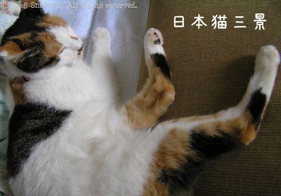 日本猫三景