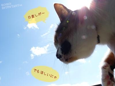 日差しが暑い