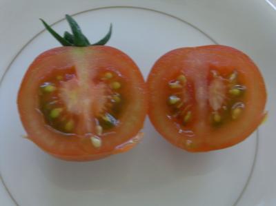 フルーツトマト味見02