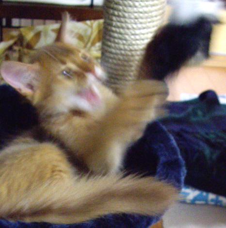 cattree02.jpg